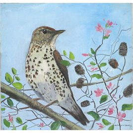 C2886 Song Thrush in the Garden – Caroline McMillan Davey
