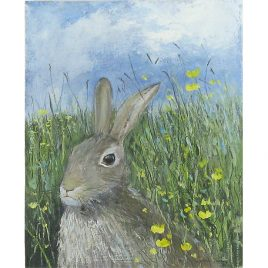C2891 Brown Hare in the Buttercup Field