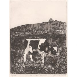 C2975 Cow at Little Holwell – Anna Kellard