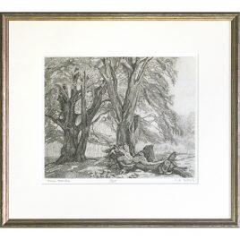 C1772 Exmoor Beeches 72/100 – Ann le Bas