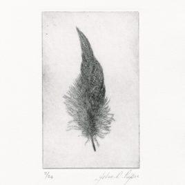 C3155 Wigeon Feather I 2/24