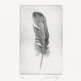 C3156 Wigeon Feather II 2/24