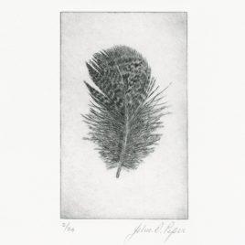 C3157 Wigeon Feather III