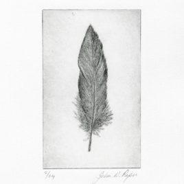 C3158 Wigeon Feather IIII 2/24