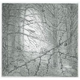 C4908 Nightjar 36/150 – Flora McLachlan