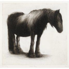 C2880 Dales Pony