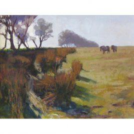C4494 Exmoor Ponies, Alderman's Barrow – Neville Cox