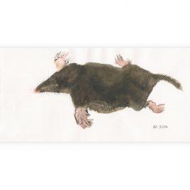C4363 Mole – Ann Farley