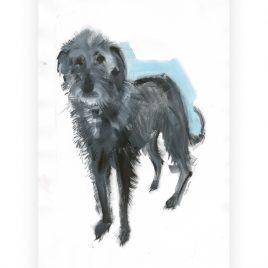C3929 Rough Haired Lurcher