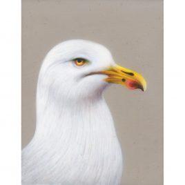 Seagull – Louise Crabb