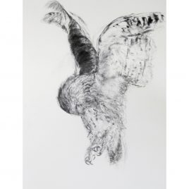 Juvenile Tawny Owl – Patricia Jordan
