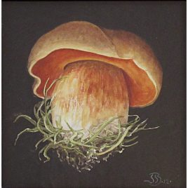C3696 Red Boletus – Jenny Barron