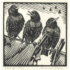 C5293 Starlings 12/50 – Richard Allen