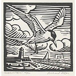 C5294 Common Tern 17/50 – Richard Allen