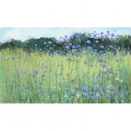 C5328 Scabious in the Field – Caroline McMillan Davey