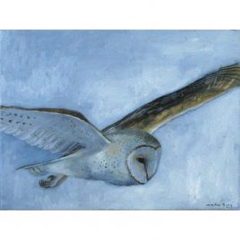C5320 Barn Owl in Flight – Caroline McMillan Davey