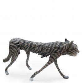 C5348 Scottish Wild Cat – Val George