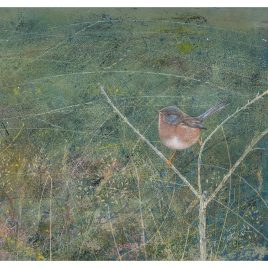 C5660 Dartford Warbler – Anne Mortimer RMS SBA