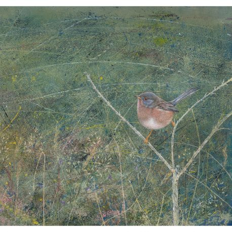 dartford_warbler – Copy