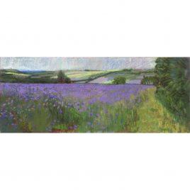 C6031 Lavender Field- Neville Cox