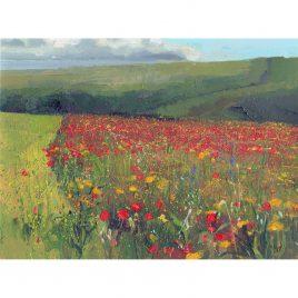 C6068 Wild Poppies – Neville Cox