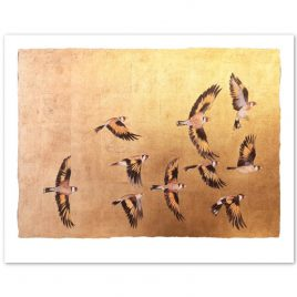 X4888 A Charm of Goldfinches – Jackie Morris