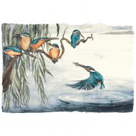 X4235 Kingfishers – Jackie Morris and Robert