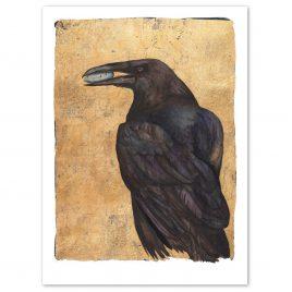 X4895 Raven- Jackie Morris and Robert Macfarlane