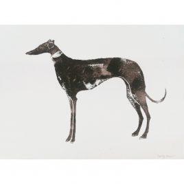 1162C Greyhound – Sally Muir