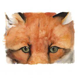 1420X Red Fox – Jackie Morris and Robert Macfarlane